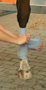 Pferde - Bein bandagieren